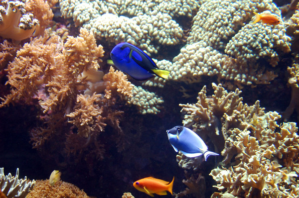 oceanario-de-lisboa-5