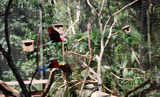 Parque das Aves em Foz do Iguaçu. Crédito: Tiago Medina.