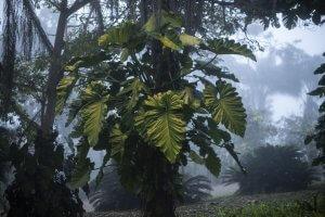 Inhotim inaugura nova exposição botânica no Google Arts